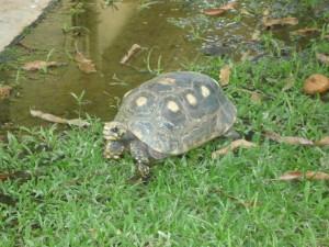 Ecology check–03/07/2015
